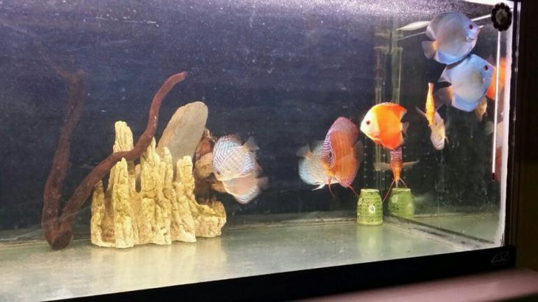 NSL Aquarium